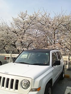 JEEP PATRIOT with Cherry Blossoms