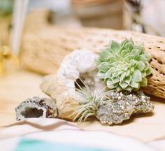 succulents and geodes www.MadamPaloozaEmporium.com www.facebook.com/MadamPalooza