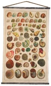 Seashells Chart
