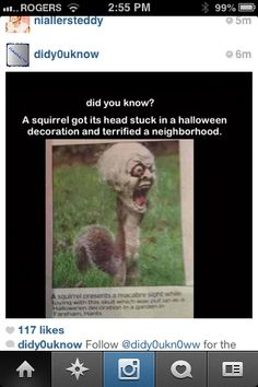 I don't know if I feel worse for the squirrel or the neighborhood it terrorized