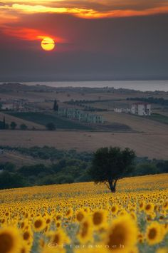 Everybody wants to visit the Toscana, Italy. The Tuscany boasts a proud heritage. Etruscans, Romans, the Middle Ages. left a striking legacy in every aspect of life. Dream Vacations, Vacation Spots, Places To Travel, Places To See, Travel Destinations, Beautiful World, Beautiful Places, Beautiful Sunset, Beautiful Flowers