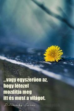 Egyszerűen Quotations, Motivation, Words, Quotes, Inspiration, Frases, Biblical Inspiration, Quote, Quote