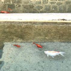 I #pesci della #fonte alla #vena #sanquiricodorcia #valdorcia #tuscany #pesce
