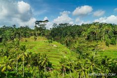 Do as Julia Roberts in Eat, Pray, Love and visit Bali`s cultural hub Ubud. Home to excellent restaurants, cafes and shops. Here are things to do in Ubud