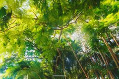 Secret mini jungle Australia, Mini, Plants, Photography, Image, Photograph, Fotografie, Photoshoot, Plant