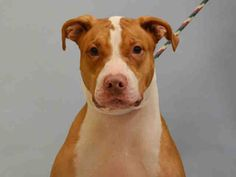 ★THANKS TO AMSTERDOG ANIMAL RESCUE:  APPLE - A1060856 IS SAFE!! 12/30/15★