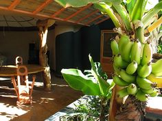 FREE FOOD Each Earthship is outfitted with one or two greenhouses that grow crops year-round, no matter the climate. This means you can feed yourself with only the plants growing inside of your house. You can also choose to build a fish pond and/or chicken coop into your Earthship for a constant source of meat and eggs.