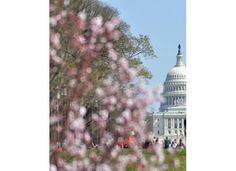 Washington DC 2011