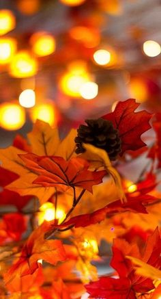 pine cones don't grow on maple trees... but it is a pretty fall inspired photo