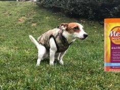 Metamucil for Dogs: Its Uses, Benefits and Side Effects Best Treats For Dogs, Dog Treats, Best Dogs, Top Dog Food Brands, Dog Has Diarrhea, Constipated Dog, Vegan Dog Food, Meds For Dogs, Dog Kennel Designs