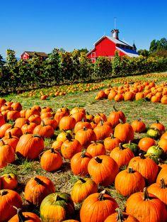 Red Barn & Pumpkin Fields