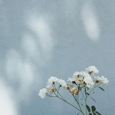 "Jessica Comingore on Instagram: ""true blue. #jcbotanicals"""