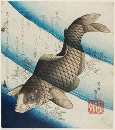 Carp in Water / Katsushika Taito II  摺物 鯉 二代目葛飾戴斗 年代不詳