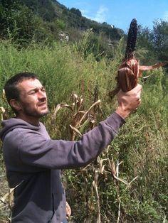 L'agricoltore come bene comune Il prodotto agricolo come bene culturale Il cibo come diritto accessibile.  in fotografia il mais spinato di Tellin Camuno