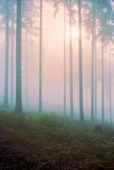 Forest in the fog.