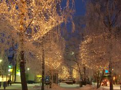 Christmas lights - Google Search