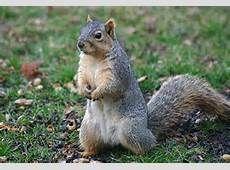 Chipmunks, Squirrels, Animals, Image, Animaux, Animal, Animales, Squirrel, Red Squirrel
