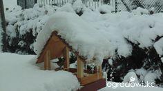 Ogródek Iwony - strona 294 - Forum ogrodnicze - Ogrodowisko