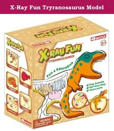 X-Ray Fun Tryranosaurus Model. Take a look at the inside of a T-Rex with this fun science kit for young children. All the excitement of an x-ray without a trip to the doctor. On one side hes a colourful dinosaur, on the other you get a glimpse at the inner workings of a T-Rex. Theres even food in his stomach! The Tyrannosaurus model is easy to assemble and teaches children about the bones, organs, diet and babies of dinosaurs. Educational fun for kids, the 4D dinosaur model is an…