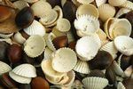 How to Make a Seashell Wedding Bouquet (7 Steps) | eHow Shell Decorations, Dremel Tool, Keep Jewelry, Drill Bit, Seashells, Shelled, Drills, Clams, Sea Shells