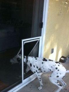 Sliding screen door for french doors do it yourself pinterest doggie door solutioingenieria Choice Image
