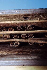 Building A Bat House Plans And Instructions Make It Together Build Habitat