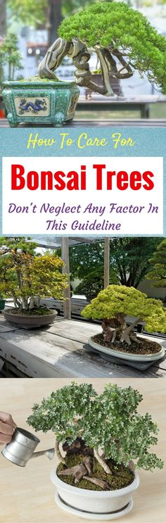 229 Best Bonsai images in 2019 | Bonsai, Plants, Garden