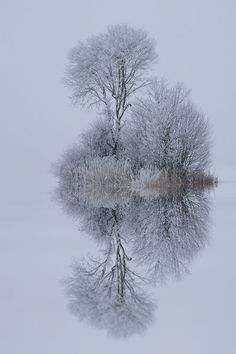 winter reflection!