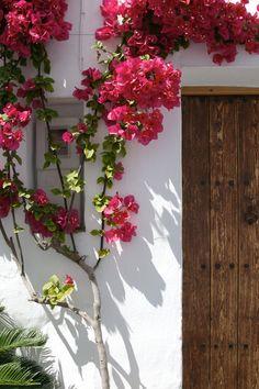 Frigiliana Beyaz çiçeklenme kasaba. İspanya. Rus Servis Çevrimiçi Diaries - LiveInternet üzerine tartışma