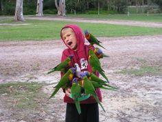鳥いっぱいすぎw (Distressed Kid Covered in Lorikeets - CollegeHumor Pictureから)