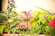 The ideal plants for window boxes are colorful, can withstand hot sun or part shade and don't have finicky watering requirements