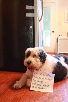 Dog Shaming Pictures - Funny Dog Quotes - This epic gallery of dog shaming pictures proves these dogs are the naughtiest in the world. The best dog shaming picture gallery ever. The post Dog Shaming Pictures appeared first on Gag Dad. Funny Animal Memes, Dog Memes, Funny Animal Pictures, Funny Dogs, Funny Animals, Cute Animals, Funny Kitties, Funny Horses, Animal Humor