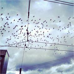Birds, birds, birds...