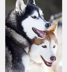 Kuma and Jamie, faithful friends
