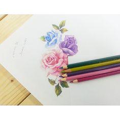 : 3 color roses #tattooistbanul #banul #tattoo#tattoos#tattooing#rose#roses#rosetattoo #colortattoo #rosedesign#drawing #design #tattoodesign #designtattoo #sketch #타투이스트바늘 #타투#수채화타투 #타투도안 #장미#장미도안
