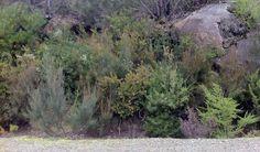 Winter flora in Wilsons Promontory National Park, Australia by Belinda Evans.