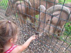 Lena et Maelle au zoo