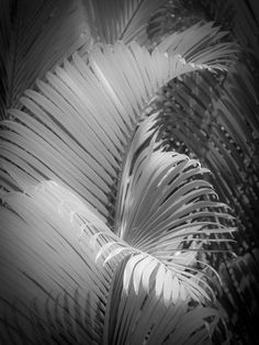"""Photograph from the series """"13 Palms"""" by Nat Coalson. See more at http://www.NatCoalson.com"""