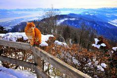 mountains of Zurich http://catailments1.blogspot.com/2013/11/cat-from-zurich-switzerland.html