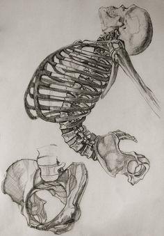 Anatomy Study by Miriam Carmack, via Behance