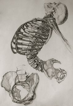 Anatomy Study by Miriam Carmack, via Behance