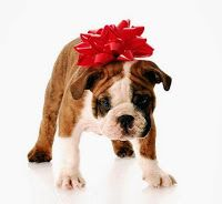 On Pets as Presents