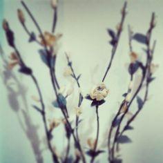 Plastic flower ♥