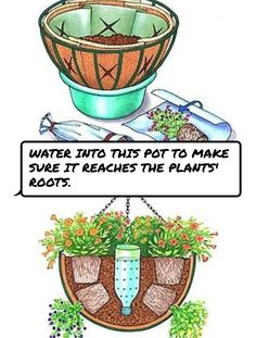 #Water into this pot to make sure it reaches the plants' roots.