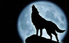lobos aullando - Buscar con Google