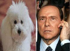 """Dudù preso dagli accalappiacani, Berlusconi telefona al canile: """"Liberatelo, è il nipote di Rin Tin Tin"""""""