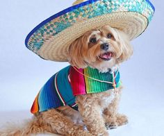 Handmade Dog Poncho from Mexican Serape Blanket - Dog Clothes - Coat - Costume - Sweater - Vest Dog Halloween Costumes, Dog Costumes, Medium Sized Dogs, Medium Dogs, Dog Bike Trailer, Chien Halloween, Dog Bark Control, Dogs And Kids, Puppy Clothes