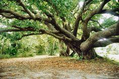 http://fc02.deviantart.net/fs51/i/2009/285/1/c/Fairy_Tree_by_Dontheunsane.jpg