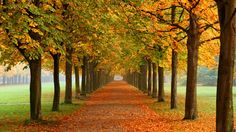 Осень. Аллея в парке.
