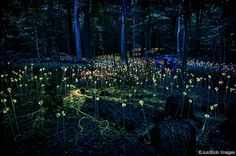 More from Light by Bruce Munro...